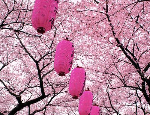 flower_festival