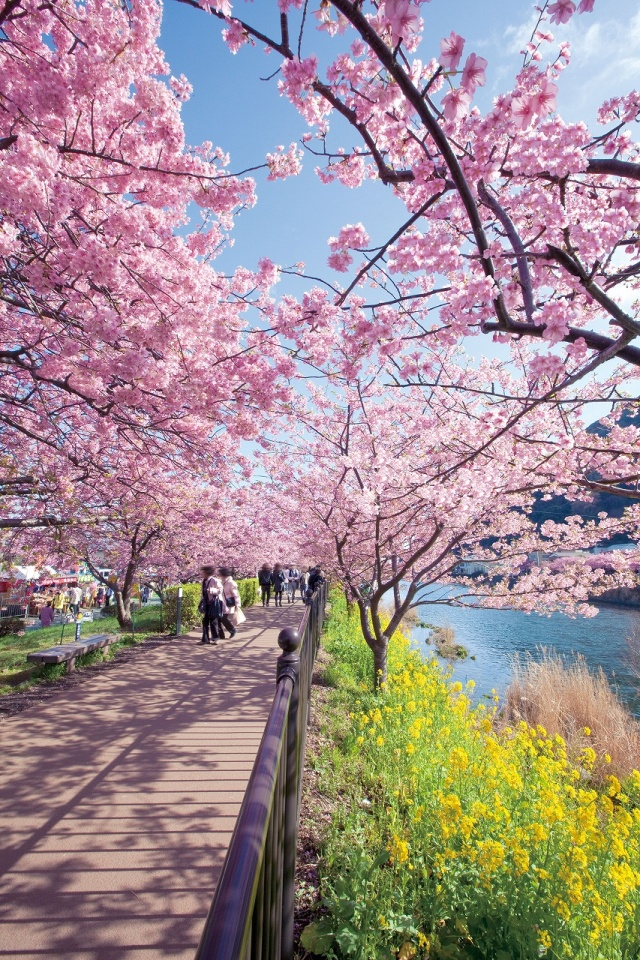 Early-Cherry-Blossom
