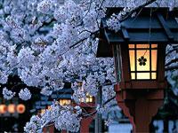 japan-sakura.gif