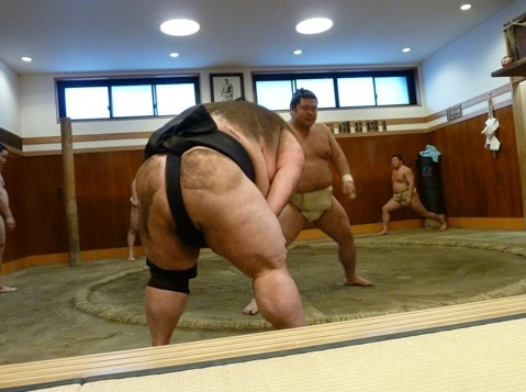 sumo-stables